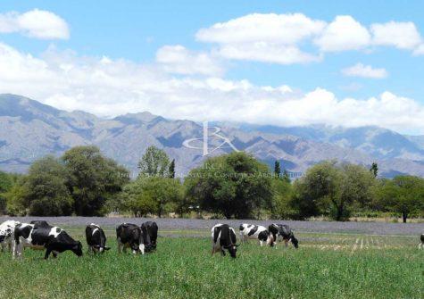 Domaine de 109 hectares