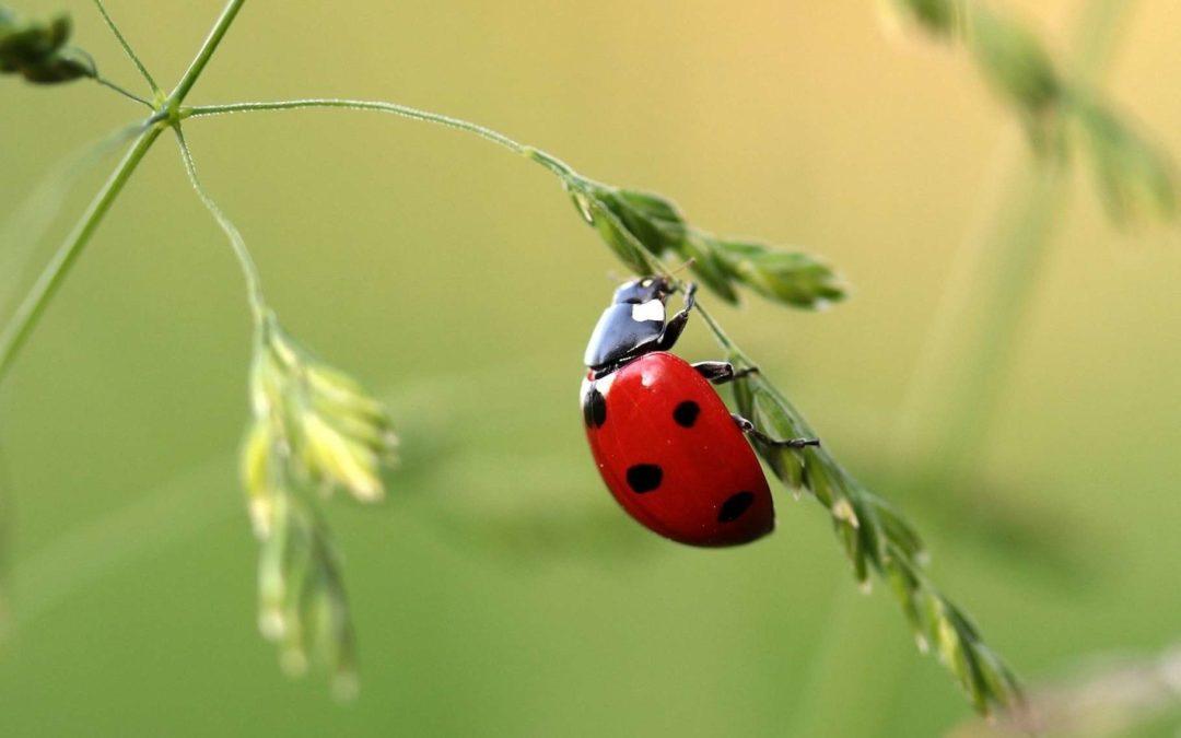 Comment favoriser la faune dans le jardin ?